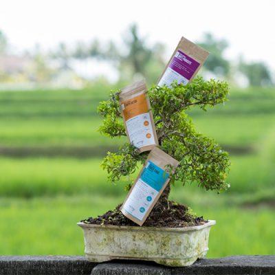 Ming Herbs Herbal Formulas